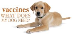 What Vaccines Do Dogs Really Need?