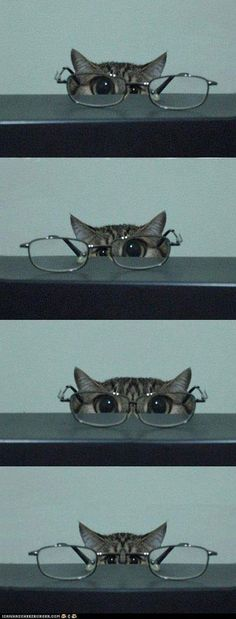 Glasses for the cat