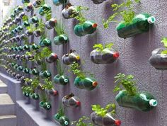 Use old soft drink bottles as planters hanging from a wall.