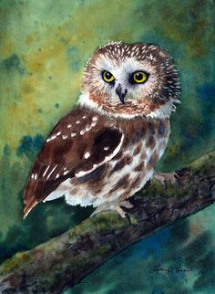 Watercolor painting of a Northern Saw Whet Owl
