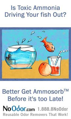 1000 images about ammonia smell solutions on pinterest for Fish smell disease