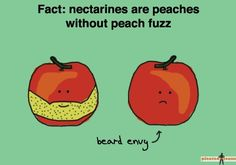 Fruit Funnies on Pinterest | Fruit, Funny and Funny Fruit