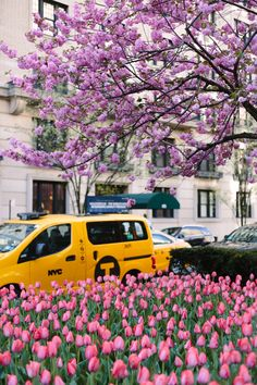5 Reasons To Visit the Central Park Conservatory Garden in Spring - York Avenue