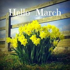 Hello March - Goodbye to winter - So long snow. It's time to watch the flowers grow.