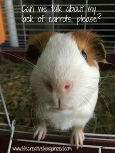 Larry the guinea pig wants you to know you can save money by re-growing carrots, peppers, and celery.