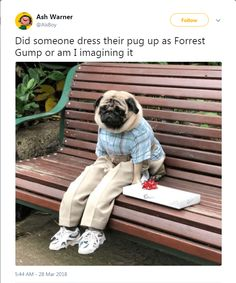 This pug dog in Halloween costume looks as he would if he was a human a sad little fellow. This pug dog in Halloween costume looks as he would if he was a human a sad little fellow. Funny Animal Pictures, Cute Funny Animals, Cute Baby Animals, Funny Dogs, Dog Pictures, Kids Animals, Baby Pugs, Pet Dogs, Pets