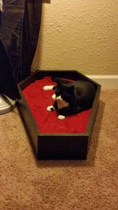 Pet Coffin Bed                                                                                                                                                      More