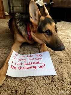Hahahahahaha My GSDs do that too, among other things to get attention