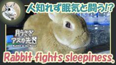 人知れず眠気と闘う!?【ウサギのだいだい 】 2016年9月29日