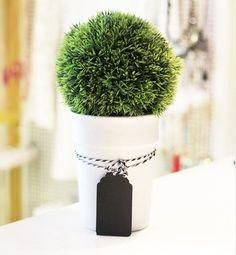 Mais um modelo de planta para decorar o seu cantinho! Estamos cheio de novidades por aqui, venha conferir!  #poire #decor #decoracao #cute #instamood
