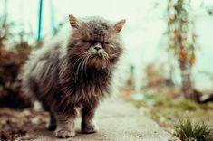 The cat #cat #catlovers #worlpressphoto #worldphotoorg #streetphotography #photographer #romaniaascunsa #street