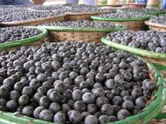 In the U.S., the Acai Berry Diet is a real boom, many international stars swear by them. In Germany, however, the diet with the Acai berry is still a real find, only a few experts and fitness trainers know the secret of this fruit. Within a short time to knock off the pounds, the skin will be tight and you feel like younger and better.