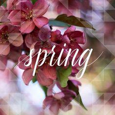 Bem vinda Primavera!!!