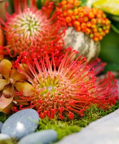 pincushion proteas are not used enough!