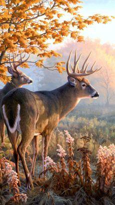 Wildlife Paintings, Wildlife Art, Animal Paintings, Animal Drawings, Deer Photos, Deer Pictures, Animals Beautiful, Cute Animals, Deer Drawing