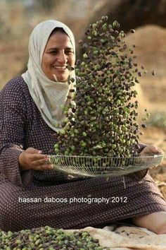 Such joy to see this woman of Palestine harvesting her olives! Palestine History, Israel Palestine, We Are The World, People Around The World, Around The Worlds, Olives, Foto Face, Heiliges Land, Naher Osten