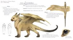 Liierra ref sheet by *rah-bop on deviantART