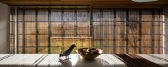 studio mk27: MM house kitchen counter and feathered friend with diffuse light from the timber screen image © fernando guerra