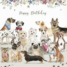 Dog Birthday Quotes, Birthday Pug, Happy Birthday Animals, Happy Birthday Cousin, Funny Happy Birthday Meme, Happy Birthday Beautiful, Glitter Birthday, Happy Birthday Images, Animal Birthday
