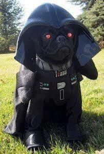 Since Join the Pugs bring the cuteness to Pug lovers all over the world. If you love Pugs. you'll love our website and social media. Dog Halloween Costumes, Pet Costumes, Yoda Costume, Puppy Costume, Costume Works, Halloween News, Halloween Pictures, Diy Halloween, Halloween Makeup