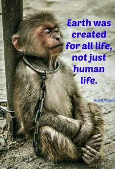 """Earth was created for all life,not just human life!Animals are not slaves,so stop animal abuse"". Amor Animal, Mundo Animal, Primates, Save Animals, Animals And Pets, Monkeys Animals, Stop Animal Cruelty, Animal Welfare, Animal Rights"