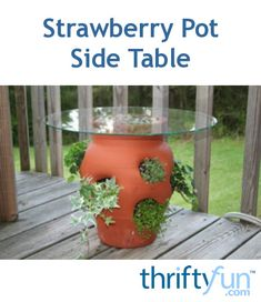 Plant with trailing plants and add a top to a strawberry pot and you have an attractive side table for your deck or patio. This is a guide about strawberry pot side table.