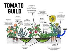 Forest Garden, Veg Garden, Vegetable Garden Design, Edible Garden, Garden Plants, Homestead Gardens, Farm Gardens, Companion Planting, Garden Planning
