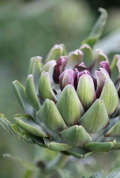 Artichoke season is at its peak in April Fruit And Veg, Fruits And Vegetables, Artichoke Season, Art Prints For Home, Flourish, Herbs, Drinks, Flowers, Nature