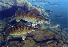 Al Agnew Golden Trout Fishing Art Print