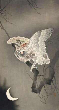 The Owl Ohara Shōson (Koson) (Japan, 1877-1945) Japan, early 1920s Prints; woodcuts Color woodblock print Image: 11 13/16 x 7 1/2 in. (30 x 19.05 cm); Sheet: 14 5/8 x 8 1/6 in. (37.15 x 20.74 cm) Gift of Chuck Bowdlear, Ph.D., and John Borozan, M.A. (M.2000.105.149) Japanese Art