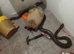 Central Thailand woman battles snake that appears from the toilet Orang Utan, Asia News, Horror, Snake, Battle, Serpents, Voici, Magic, Woman