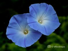 A wild flowers photography gallery