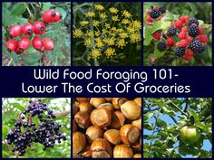 Wild Food Foraging 101- Lower The Cost Of Groceries