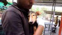 """""""O GRITO DO BICHO"""": Resgate de cadela  com cinomose na Índia"""