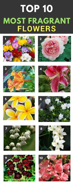 Everyone has their preferences, but to us these 10 are the most fragrant flowers in the world! Check them out and feel free to add your favorites in the comments section.