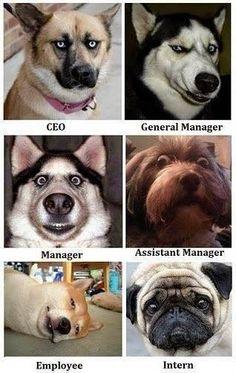 LA ENTROPIA DEL QUINTAL: Las caras de los empleados