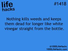 Vinegar is a great way to commit weed homicide!