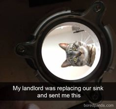 40 SNAPCHATS THAT PROVE THEY SHOULD CALL IT SNAPCAT INSTEAD | CutesyPooh