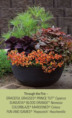 Through the Fire brings colorful annuals and perennials together that will do great in a full sun area.