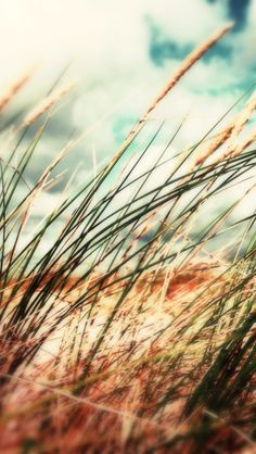Grass Close-up Sky Clouds Background - The iPhone Wallpapers