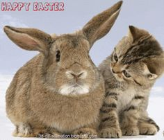 3D Gif Animations - Free download i love you images photo background screensaver e-cards: cute animal pets animated GIFs baby bunnies, cuddl...