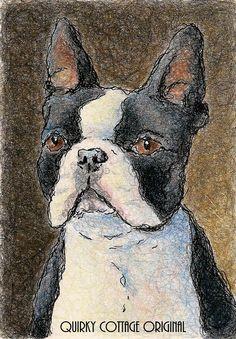 Boston Terrier Dog Portrait