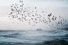 Waves crashing, birds calling.