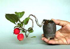 mini bonsai - http://www.teoti.com/food-recipes/50710-edible-bonsai-trees.html