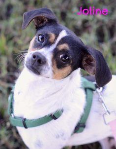 Joline - Nate's Honor Animal Rescue