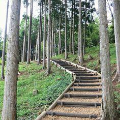 【tofu_fufu】さんのInstagramの写真をピンしています。《お散歩道 優しい空間でした #みんなのスカイウォーク #三島スカイウォーク #お散歩 #林 #woods #naturelove #nature #ウッドチップ #杉林 #メルヘン #fantasy #階段 #枕木 #夏の思い出 #夏休み》