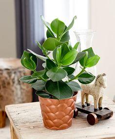 7 pflanzen f r alle die keinen gr nen daumen haben. Black Bedroom Furniture Sets. Home Design Ideas