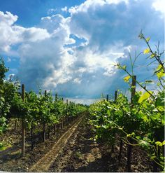 Power of #nature  #Fantinel #winery #sky #fvg #italy #vineyards #winelovers…