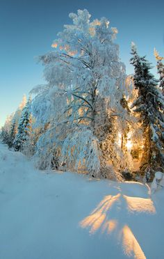 welcome winter by *KariLiimatainen on deviantART
