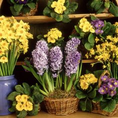 Spring Flower Arrangement Primula, Narcissus, Hyacinthus  Photographic Print by Lynne Brotchie